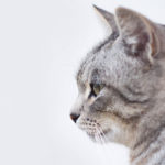 opieka nad kotami w Poznaniu