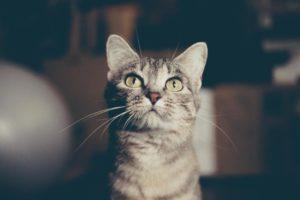 opieka nad kotem poznań